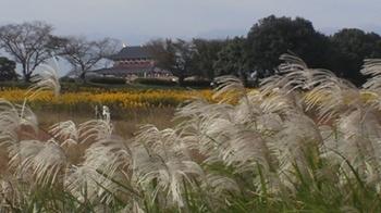 201010平城京1.JPG